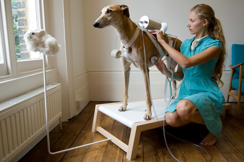 ventilation-dog