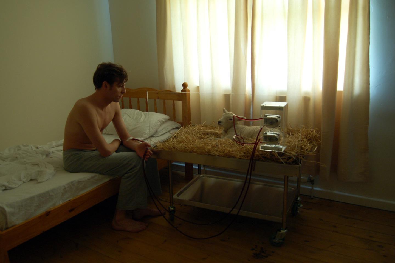 dialysis-sheep